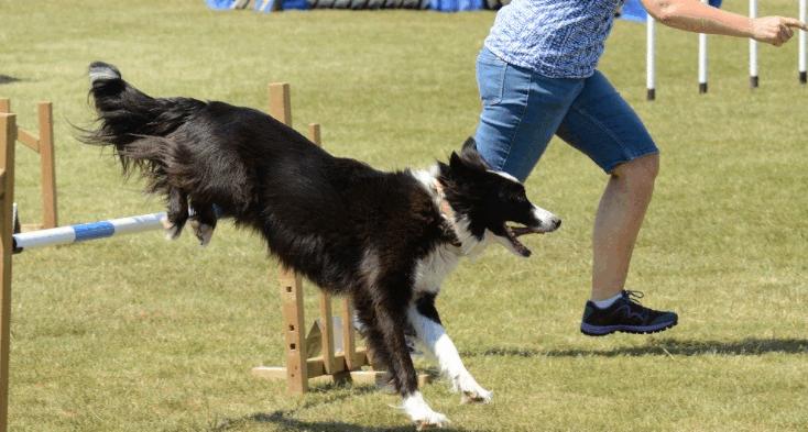 dog training3